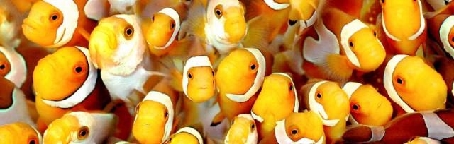 fishhyyy