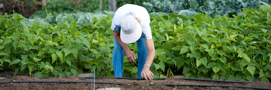 Cooperative Extension: Garden & Yard