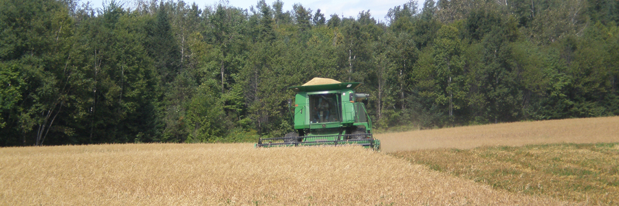 Cooperative Extension: Grains & Oilseeds