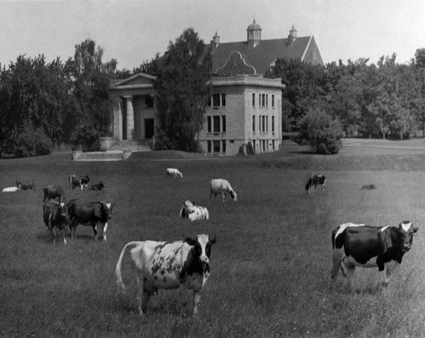 Cows in front of Carnegie Library, circa 1937