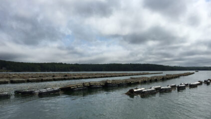 Oyster cages in the Damariscotta River