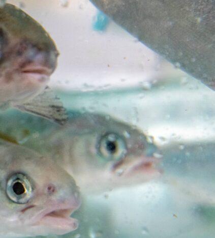 fish at AAHL