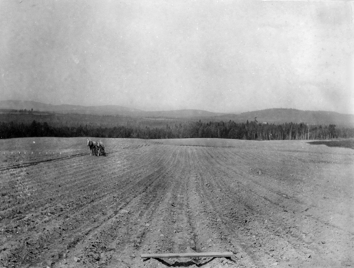 AF-historic-field-horses