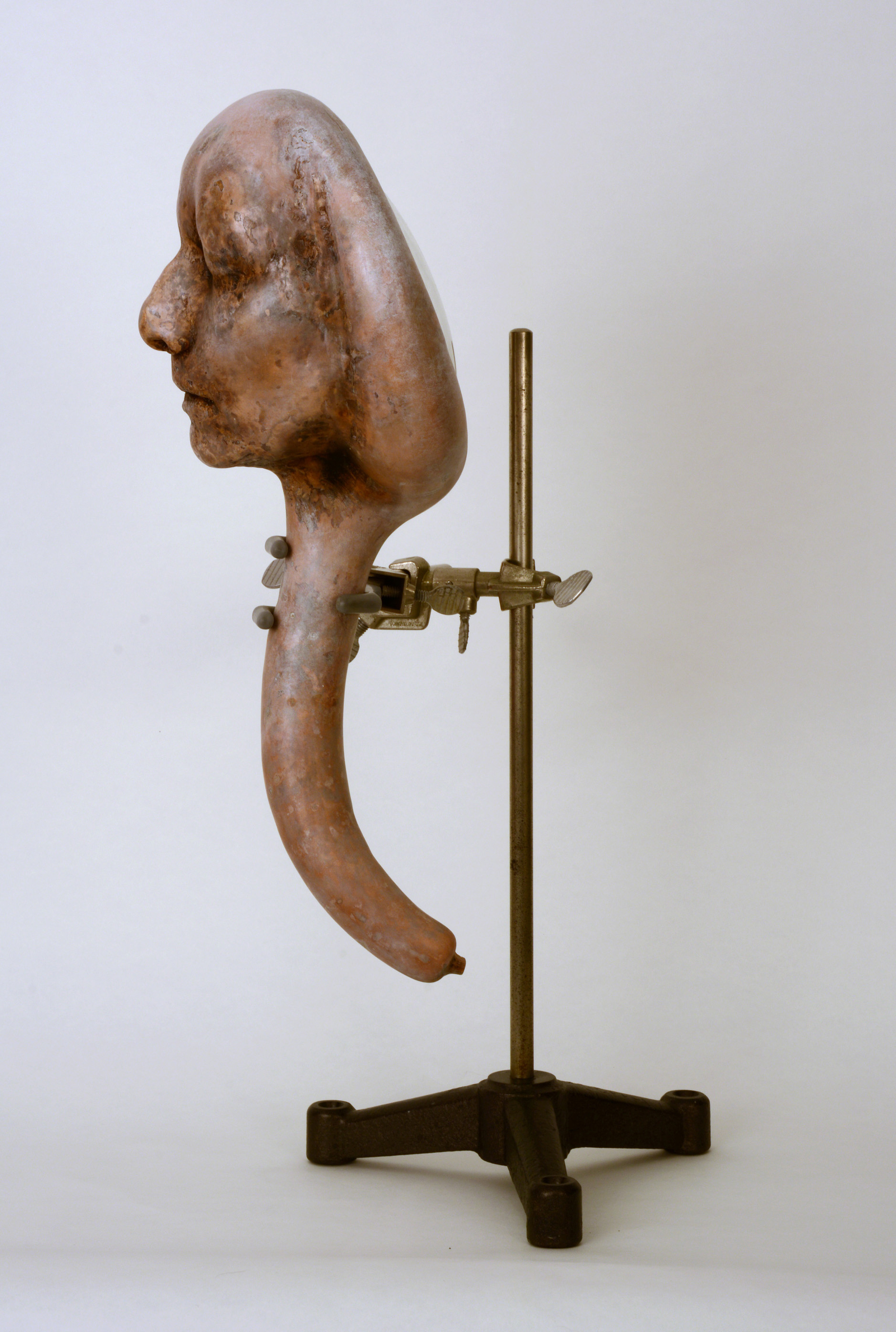 Imperfect Consilience, constrained (mold grown) gourd, metal stand, glass and copper
