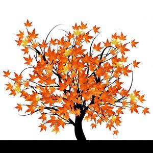 Tree with yellow/orange leaves