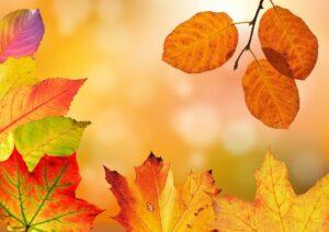 Fall Foliage close up