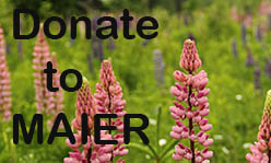 Lupines in a field with text Donate to MAIER