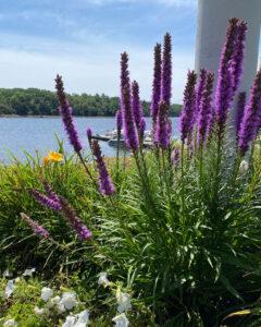 Purple flowers on seashore