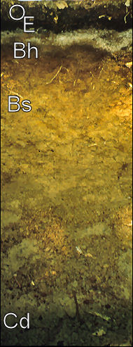 Hardwood Soil