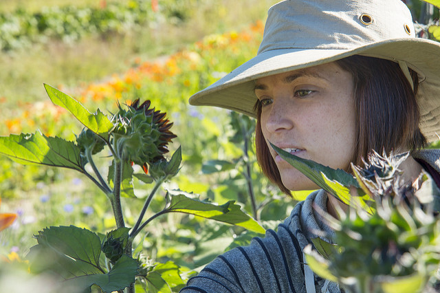 umaine student looking at plants
