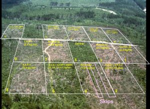 Aerial, landscape view of forestry experiment with grids overlain