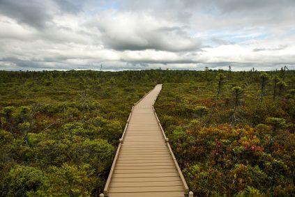 Photo of boardwalk at Orono Bog