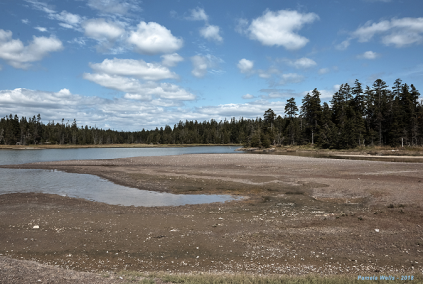 Photo of salt marsh in Maine