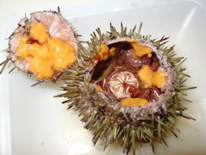sea urchin cut open to reveal gonads