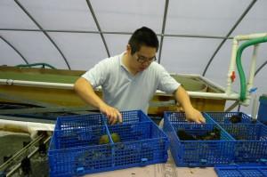 student feeding sea urchins