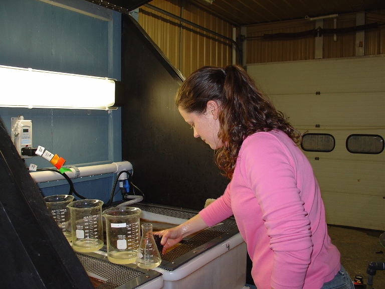 Nicole collecting conditioned urchin broodstock for spawning