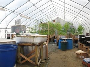 aquaponic plants and fish tanks