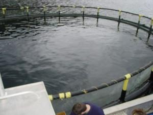 salmon net pen used to rear cod