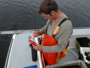 Urchins are counted into a mesh nursery tube