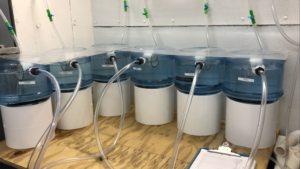 experimental system for larvae