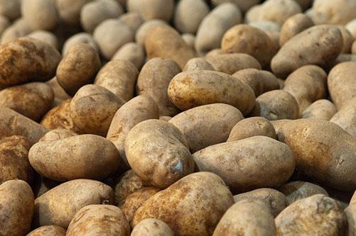 Local Maine potatoes