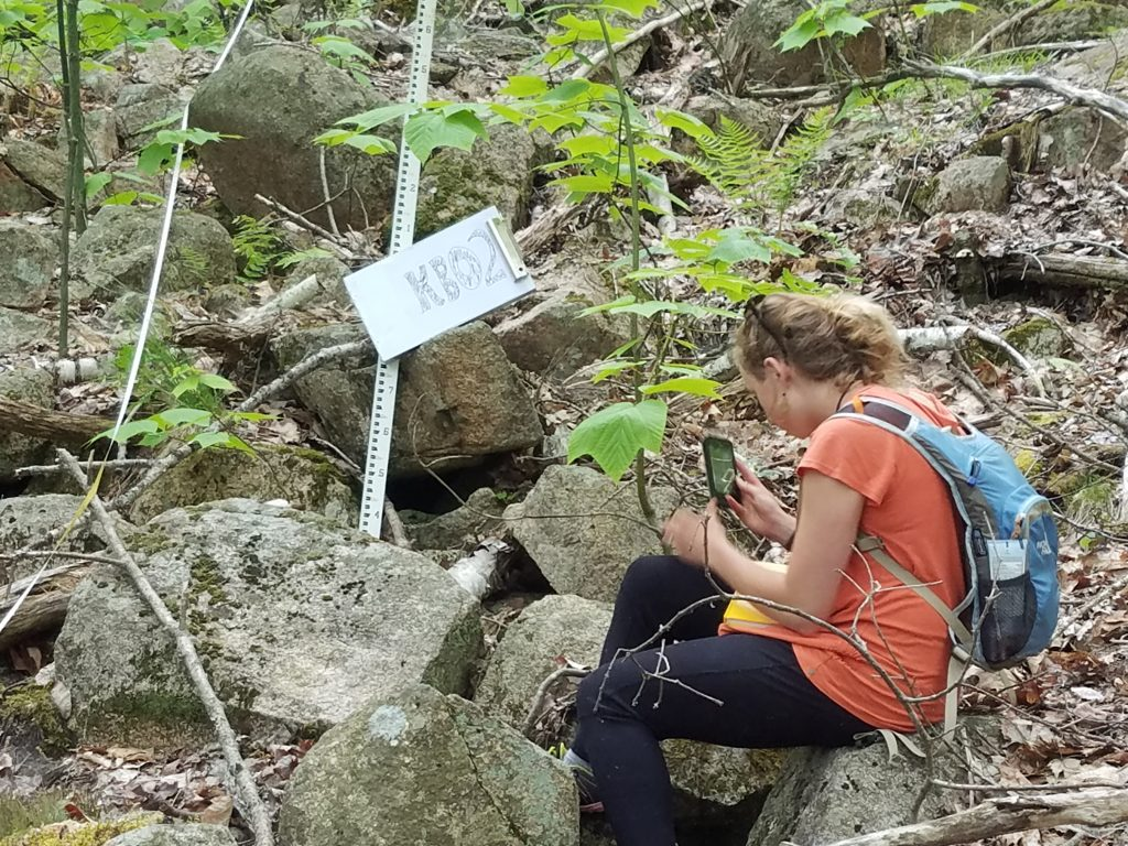 undergraduate field work