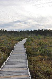 bog boardwalk