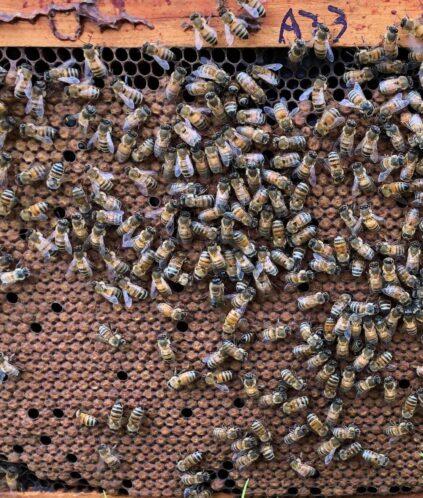 Pat Hurley Bees Up Close