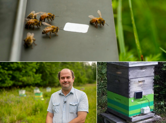 Three image collage - close up of honeybees on a black surface, man in a blue shirt standing in the foreground of a field with beehives, a beehive with a sensor on the front