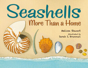seashells-more-than-a-home-cover
