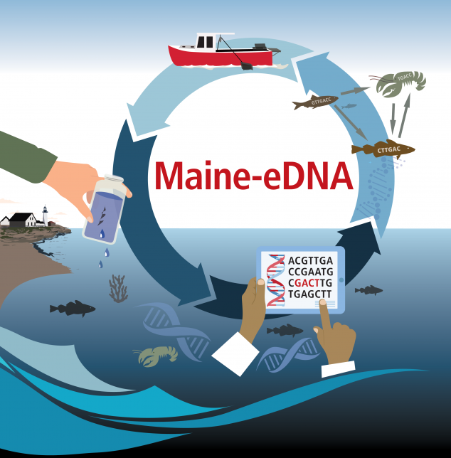 Infographic describing Maine-eDNA