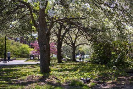 Environmental Stewardship Orchards