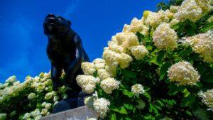 image of black bear statue