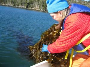 waste water treatment site Kelp
