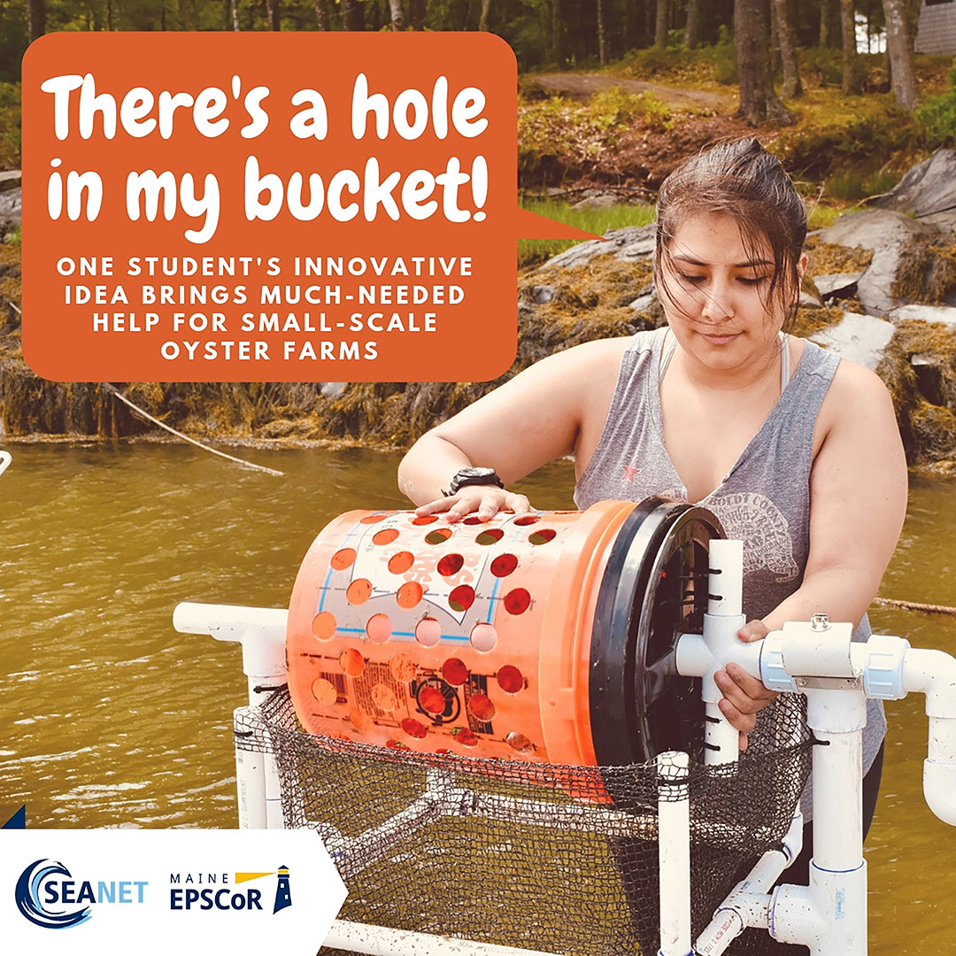 featured image for There's a Hole in my Bucket: Innovations in Oyster Sorting