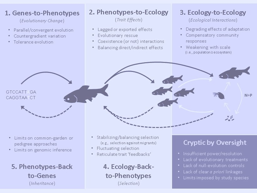 Eco-Evolutionary Dynamics and Contemporary Evolution