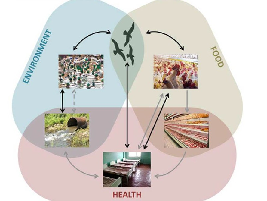 Schematic of evolutionary interactions linking food, health and environment