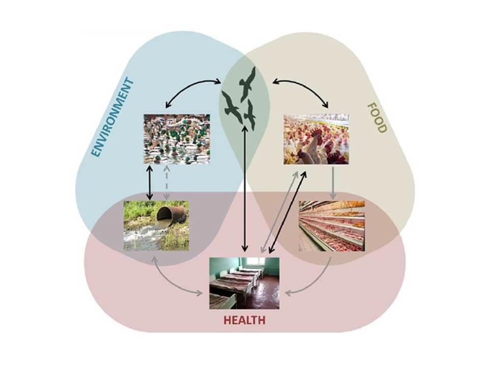 Anthropogenic and Managed Evolution
