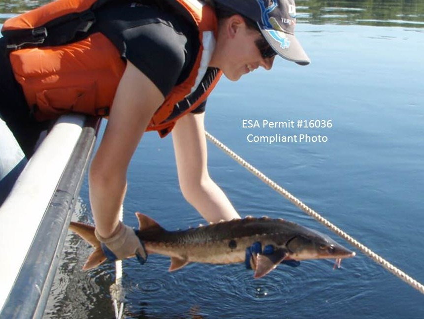 Conservation and Ecology of Aquatic Species