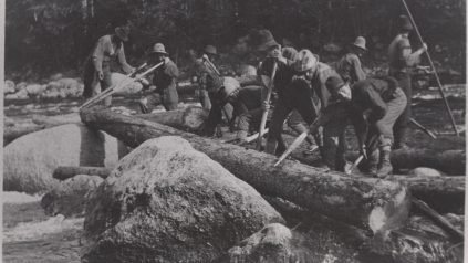 P304: Men clearing small log jam with peaveys on Wassataquoik River, c. 1900