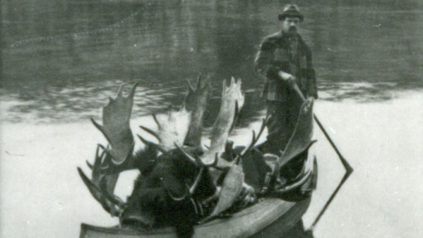 Man poling canoe full of moose racks across lake, William Atkins, Munsungan Lake. Thanksgiving, 1904.
