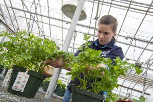 ENH student w plant