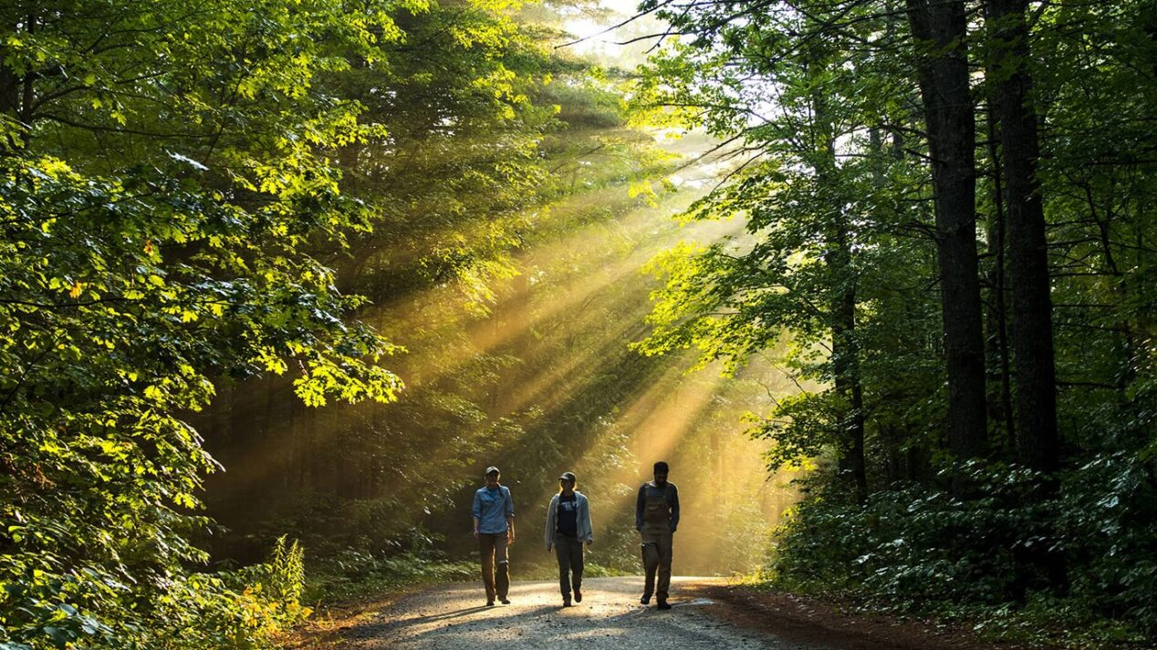 three researchers walking through a sunlit forest