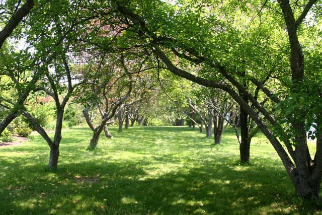 Littlefield Garden, UMaine