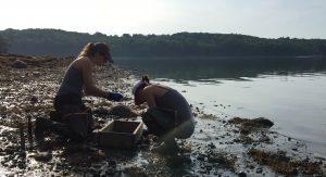 Students sampling clams on mudflat