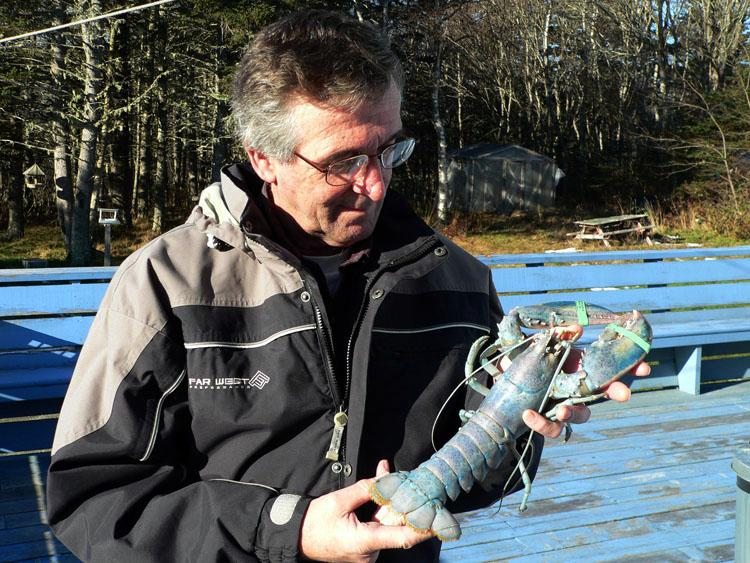"Real D'Entremont's Blue Lobster — Photo by Ted d""Eon (caught off West Pubnico, NS) – 12/2007"