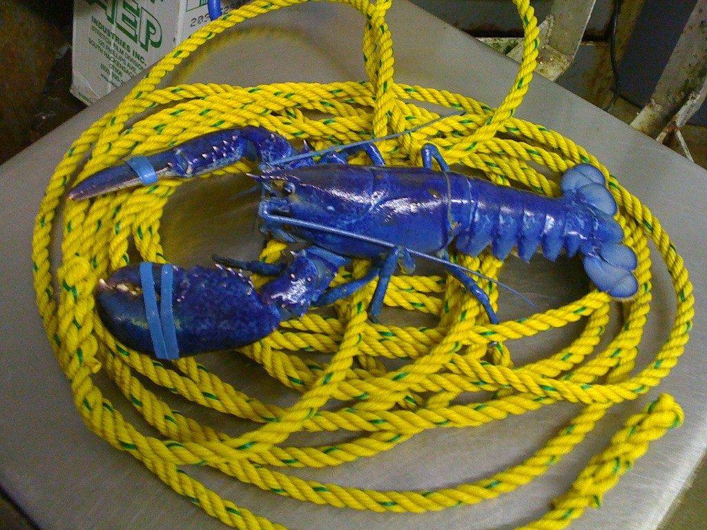 U Maine Lobster Institute Featured Photos - Lobs...