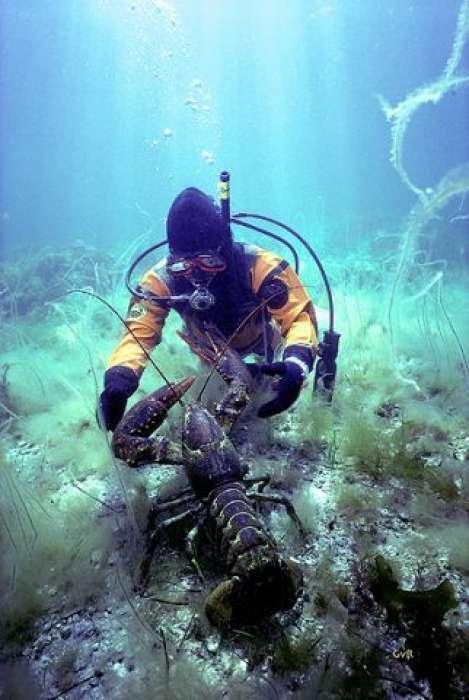 deep sea diver meets a lobster