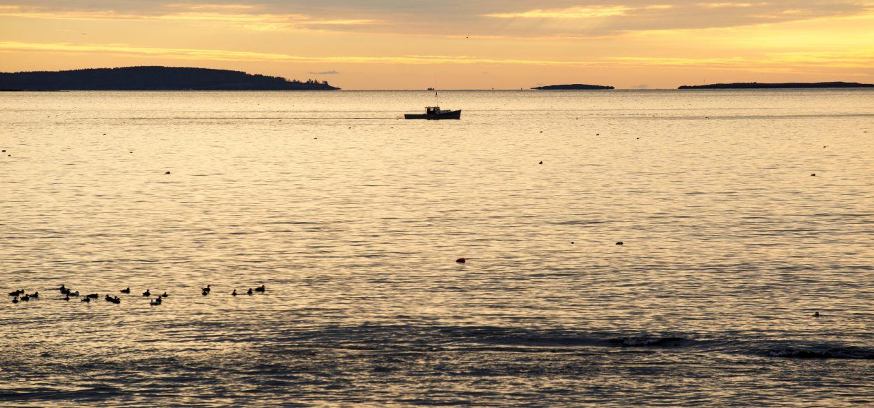 Photo of single boat making its way across the water with sea birds on the water in the foreground.