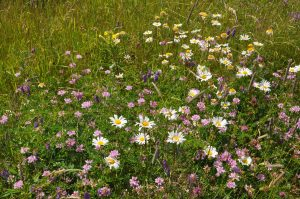 Grouping of flowers found at Holmes Point